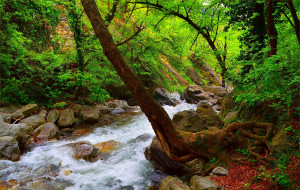 Поток, Весна, Лес, Камни, Речка, Spring, River, Forest, Flow