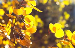 природа, листья, ветки, осень, деревья