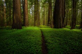 природа, лес, зелень, лето, деревья, парк, стволы, поляна, растительность, тропинка