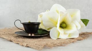 еда, кофе,  кофейные зёрна, чашка, цветок