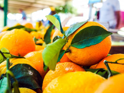 еда, цитрусы, лимоны, желтые, листья