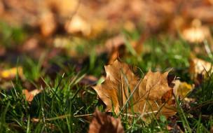 природа, листья, трава