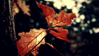 природа, листья, деревья