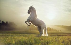 животные, лошади, лошадь, прекрасное, создание, красивое, сильное, грациозное, великолепное
