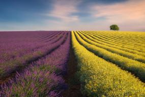 природа, поля, поле, небо, лаванда