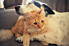 животные, разные вместе, кот, собака