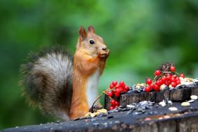 а это белочка , животные, белки, природа, поза, ягоды, пень, белка, семечки, стойка, белочка, калина, трапеза