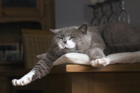 животные, коты, спящий, кот