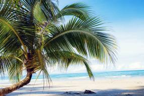 природа, тропики, море, пляж, пальма