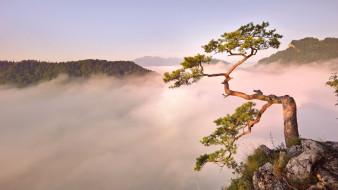 природа, деревья, дерево, горы, облака