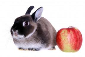 животные, кролики,  зайцы, кролик, яблоко