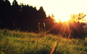 обои для рабочего стола 2560x1600 природа, восходы, закаты, трава, колоски, лучи, деревья