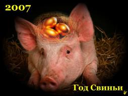 животные, свиньи, кабаны
