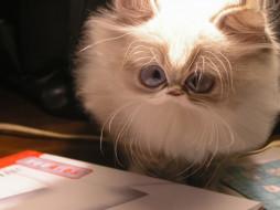 cat, юмор, приколы