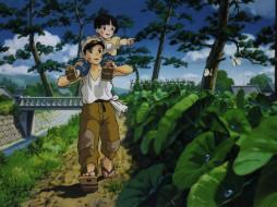 аниме, grave, of, the, fireflies