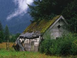 туман, домих, хибара, разруха, трава, дерево, ограда, зелень