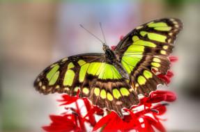 обои для рабочего стола 3200x2125 животные, бабочки, яркий, крылья, цветок