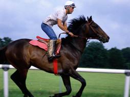спорт, конный