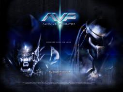 кино, фильмы, alien, vs, predator
