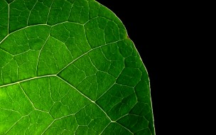 обои для рабочего стола 1920x1200 природа, макро, край, кусок, лист, зеленый
