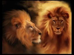 лев, рисованные, животные, львы