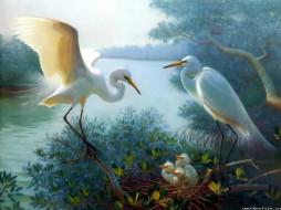 аисты, рисованные, животные, птицы