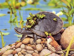 черепаха, птица