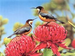 рисованные, животные, птицы