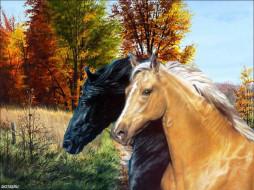 мы, тамарой, ходим, парй, рисованные, животные, лошади