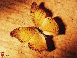 рисованные, животные, бабочки