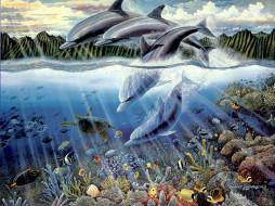 дельфин, черепаха, рыба