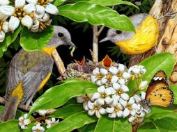 птица, птенец, бабочка