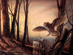 рисованные, животные, птицы, совы, филины
