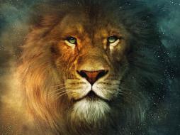 рисованные, животные, львы