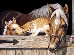 лошадь, кот