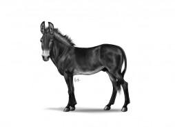 обои для рабочего стола 1024x768 рисованные, животные, лошади