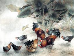 рисованные, животные, птицы, курицы, петухи, цыплята