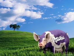 бренды, milka
