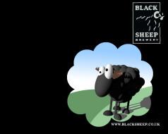 бренды, black, sheep