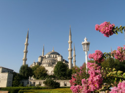 цветы, востока, города, стамбул, турция