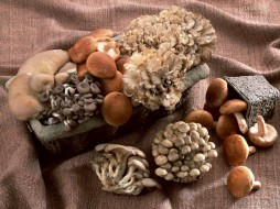 еда, грибы, грибные, блюда