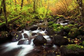 природа, реки, озера, речка, лес, деревья, осень, камни