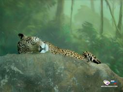 отдых, на, природе, животные, Ягуары