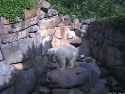 белый, медведь, животные, медведи