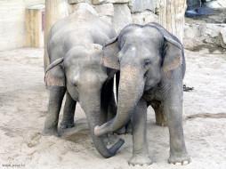 слоники, животные, слоны