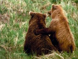 Ну же, не бойся, я с тобой! обои для рабочего стола 1280x960 ну, же, не, бойся, тобой, животные, медведи