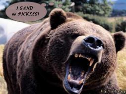 животные, медведи
