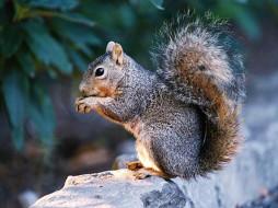 орешки, то, травкой, животные, белки