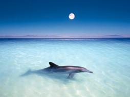 один, животные, дельфины