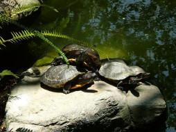 животные, Черепахи